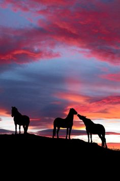horses at sunset