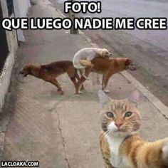 Luego nadie me cree Animals And Pets, Funny Animals, Cute Animals, Funny Jokes, Hilarious, Mexican Memes, Dad Humor, Me Too Meme, Grumpy Cat