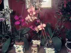 I love my orchids...they love me back...