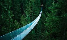 Suspended bridge in Vancuver, Canada... crazy!