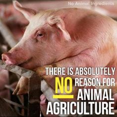 why #vegan