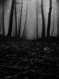 Black and White dark nature forest mist Woods fog gloomy pines bleak Dark Art Photography, Inspiring Photography, Mother Nature Tattoos, Paper Flower Art, Modern Art Deco, White Mountains, Dark Places, Dark Forest, Mists