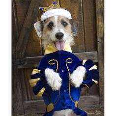 This handsome pup is from our 2013 Furreaky Halloween Costume Contest. Halloween Costume Contest, Funny Halloween Costumes, Furry Tails, Pet Costumes, Pet Treats, Prince Charming, Mans Best Friend, Playing Dress Up, Animals Beautiful