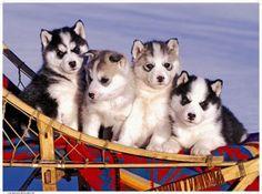 Cute Baby Animals! - http://buzz.io/3908/cute-baby-animals/