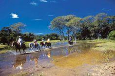 Pantanal é eleito um dos melhores destinos de vida selvagem no mundo