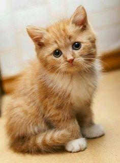 So adorable ❤