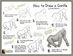 How to Draw a Gorilla Gorilla Craft, Dian Fossey, One And Only Ivan, 3rd Grade Reading, Book Study, Play To Learn, Children's Literature, Toddler Activities, Animal Drawings
