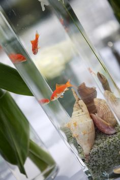 Awesome table centerpieces for a beach wedding. I would switch the fish to either beta or something else more colorful. A tropical freshwater species most likely.