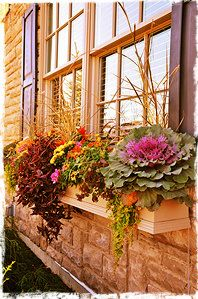 I would love to live someplace where a window box like this would actually thrive!