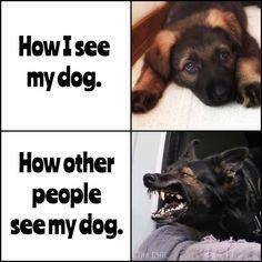 901 Best German Shepherd Meme S Images In 2019 German Shepherd