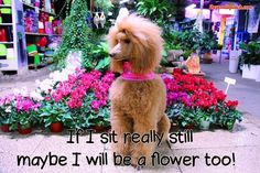 IF I SIT REALLY STILL MAYBE I WILL BE A FLOWER TOO!!!