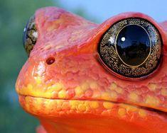 50 photos époustouflantes qui capturent des moments fabuleux de la nature…