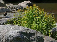 Ranta alpi Natural Beauty, Nature, Image, Naturaleza, Off Grid, Natural, Mother Nature, Scenery
