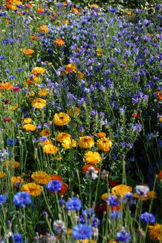 """""""When your eyes freeze behind the grey window and the ghost of loss gets in to you, may a flock of colours, indigo, red, green and azure blue come to awaken in you a meadow of delight."""" ~ John O'Donohue"""