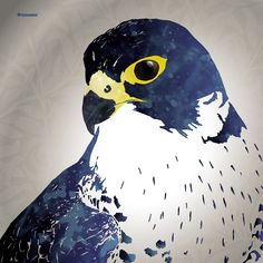 Birds Of Prey, Raptors, Location History, Vector Art, Dark Brown, Ale, British, Touch, Illustrations
