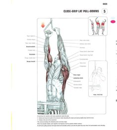 Close-grip Lat Pull-downs Workout! MusclesPro.com