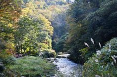 山中温泉の鶴仙渓