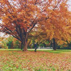Instagrammer martinomaras took this autumn image in Narrabundah, Canberra