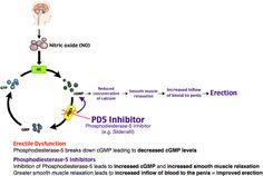 Rosh Review - erectile dysfunction - PDE5 inhibitors - pharm