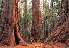 Redwood National Park, Crescent City, CA. Because I think these trees are magic.