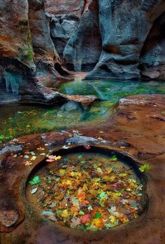 Pool of autumn leaves in a gorgeous rock formation...