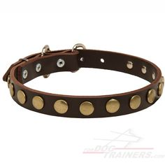 Gorgeous Quality Leather Dog Collar with Exclusive Design - $24.90 | www.fordogtrainers.com