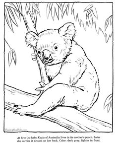Koala page to color - Zoo animals Castle Coloring Page, Horse Coloring Pages, Bible Coloring Pages, Printable Adult Coloring Pages, Coloring Pages For Kids, Coloring Sheets, Coloring Books, Camouflage Makeup, Cinderella Coloring Pages