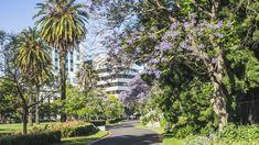 Melbourne, pogoda, Australia, przedeptane, klimat