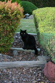 """""""A cat improves the garden wall in sunshine and the hearth in foul weather"""" Judith Merkle Riley"""