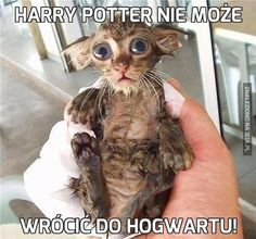 Funny Cute Quotes Harry Potter 69 Ideas For 2019 Animal Memes, Funny Animals, Cute Animals, Dog Quotes Funny, Cute Quotes, Harry Potter Mems, Happy Birthday Funny Cats, Cat Memes, Funny Cute