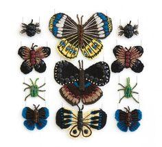 Excelente colección de insectos