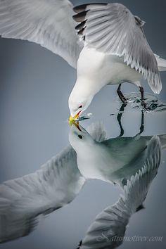 Seagull Mirror <3