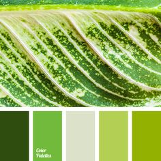 color combinations, color matching, color of fresh greens, color of greens, color solution for design, grass color, green shades, lime and green colors