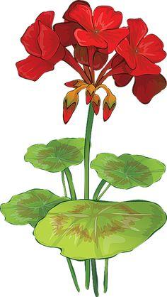 Grab This Free Summer Flower Clip Art: Geranium