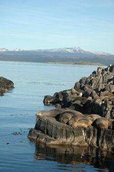 Isla de los Lobos - Tierra del Fuego