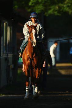 California Chrome Photos: Belmont Stakes: Previews