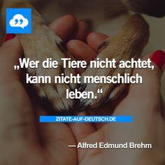 #Menschlich, #Menschlichkeit, #Spruch, #Sprüche, #Tiere, #Zitat, #Zitate, #AlfredEdmundBrehm