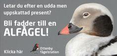 Fågelskydd