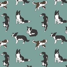 border collie illustrations - Google Search