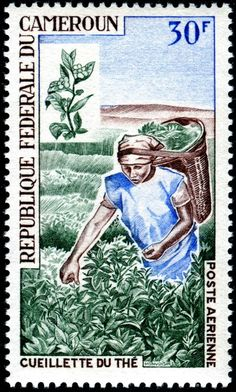 Tea harvest, an airmail stamp designed and engraved by Michel Monvoisin, and issued by Cameroun on June 5, 1968 as one of a set of five stamps publicizing economic development, Scott No. C103.