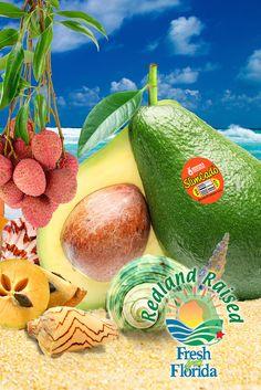 Florida tropicals are coming into their season: SlimCados, starfruit, guava, lychees, passionfruit and so much more. Enjoy the exotic tastes of the tropics. http://www.brookstropicals.com/#utm_sguid=140509,e4349f44-5a20-c6fa-b335-62e93e2e3090