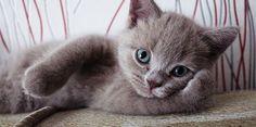 | Kedi Latte +