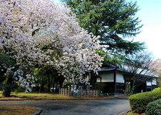 Where to view cherry blossoms, enjoy a summer picnic, admire the fall leaves or stroll through the winter greenery. The 20 top picks of Tokyo Japanese gardens, whenever you visit! Cherry Blossom Season, Cherry Blossom Tree, Blossom Trees, Tropical Greenhouses, Tokyo Travel Guide, Shinjuku Gyoen, Temple Gardens, Small Waterfall, Imperial Palace
