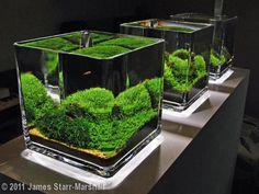 planted aquarium   Tumblr