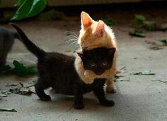 Testvéri szeretet.