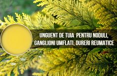 Natural Health Remedies, Cancer, Nature, Plant, Naturaleza, Outdoors, Natural, Mother Nature, Scenery