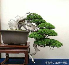 A Goldmine of Great Bonsai Bonsai Garden, Planting Succulents, Cacti Garden, Bonsai Trees, Garden Landscape Design, Garden Landscaping, Ikebana, Bonsai Wire, Garden Windmill