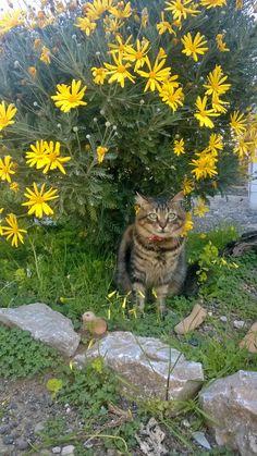 My cat, Kedim Işık