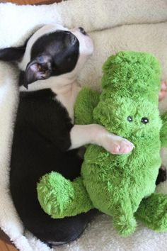 Omg.... The cuteness...I'm butter. On a side note, this was Dude's first stuffed toy and he loved it until he bit the tail off! Lol!