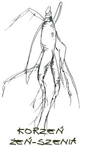 Zapewne każdy z Was słyszał o roślinie z egzotycznie brzmiącą nazwą żeń-szeń. Spotykamy się z nią dosyć często w kosmetyce, ale ma ona również zastosowanie w medycynie. Pod nazwą żeń-szeń kryją się wszystkie naturalne wyciągi otrzymywane z roślin rodziny Araliaceae.    Kup żeńszeń najlepszej jakości na www.leki-wschodu.pl